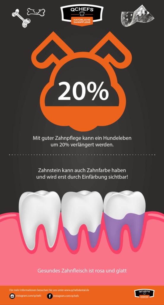 zahngesundheit Hund zahngesundheit hund Fakt: Infografik8 Zeichenfl  che 1 553x1024