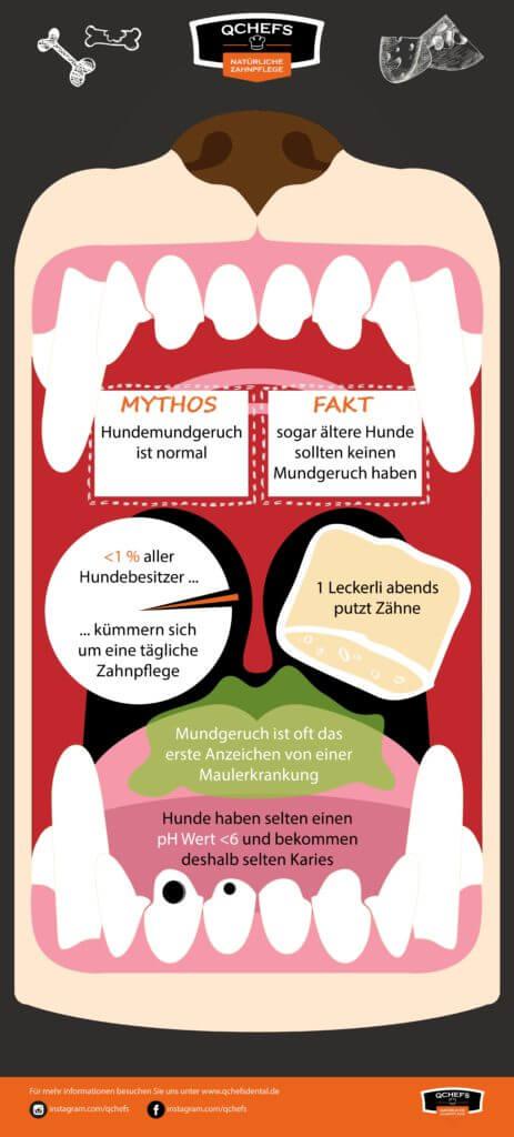 Zahnstein Hund zahnstein hund Fakt: Infografik9 Zeichenfl  che 1 463x1024