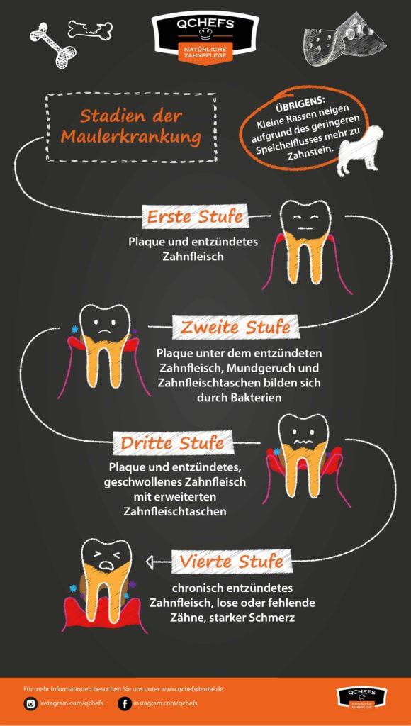 zahnpflege-hund zahnpflege-hund Fakt: Mundh  hlentumor kann man vorbeugen2 Zeichenfl  che 1 580x1024