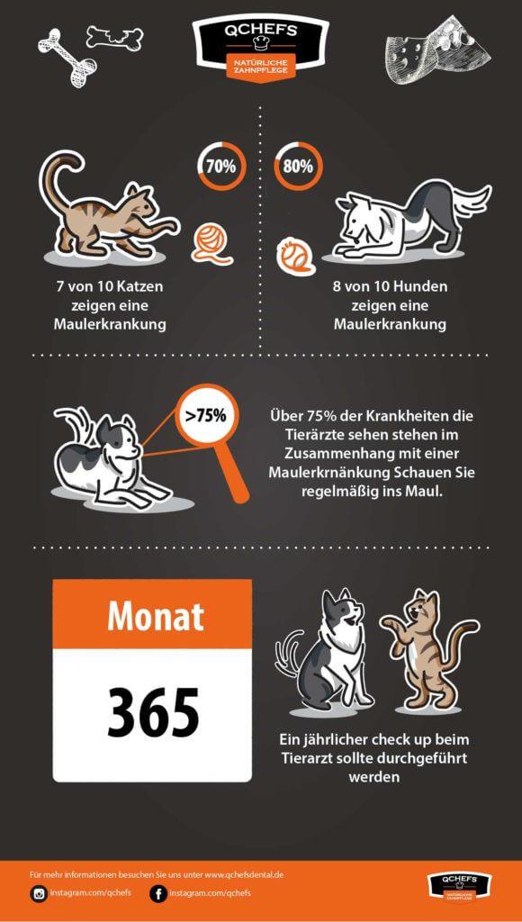 zahnpflege katze Fakt: Tier  rzte Zeichenfl  che 1 580x1024